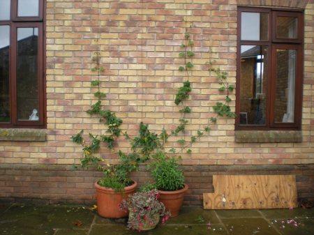Pot Plants - Click for large