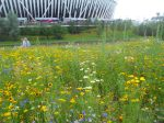 The Olympic ParkFlowers