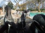 The Penguin Beach At London Zoo