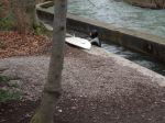 A Surfer In Myunich