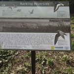 Barking Riverside Wildlife