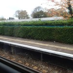 Hedges At Cathays Station