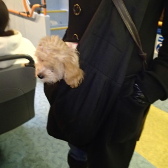 A Pocket Dog