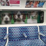 The Puppies In TheWindow